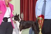 BOB_Clubsiegerin_Boston_Terrier__2016